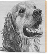 Wet Smiling Golden Retriever Shane Wood Print by Kate Sumners