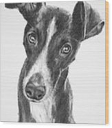 Whippet Black And White Wood Print by Kate Sumners