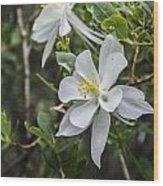 White Columbine Wood Print by Aaron Spong
