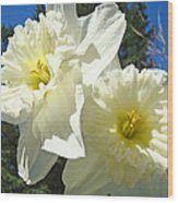 White Daffodils Flowers Art Prints Spring Wood Print by Baslee Troutman