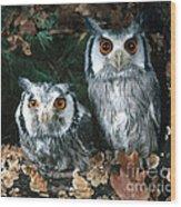 White Faced Scops Owl Wood Print by Hans Reinhard