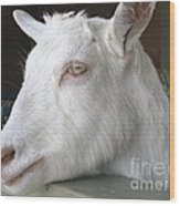 White Goat Wood Print by Ann Horn