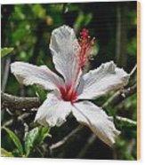 White Hibiscus Wood Print by DUG Harpster