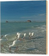 White Ibis Near Historic Naples Pier Wood Print by Juergen Roth