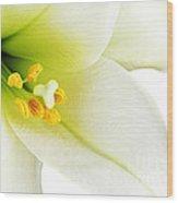 White Lilly Macro Wood Print by Johan Swanepoel