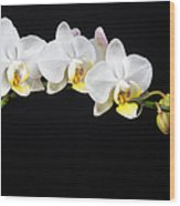 White Orchids Wood Print by Adam Romanowicz