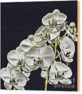 White Orchids Wood Print by Tom Prendergast