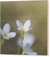 White Serenity Wood Print by Neal  Eslinger