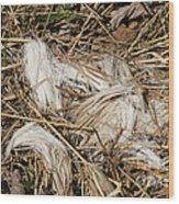 White-tailed Deer Hair Wood Print by Linda Freshwaters Arndt