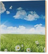 Wild Daisies In The Grass With A Blue Sky Wood Print by Sandra Cunningham