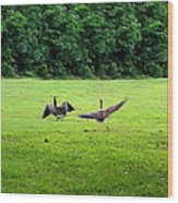 Wild Goose Chase Wood Print by Kristin Elmquist