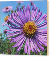 Wild Purple Aster Wood Print by Christina Rollo