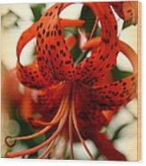 Wild Smokies Lily Wood Print by Karen Wiles