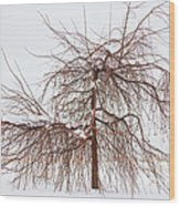 Wild Springtime Winter Tree Wood Print by James BO  Insogna