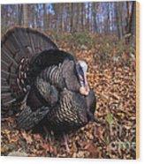 Wild Turkey Displaying Wood Print by Len Rue Jr