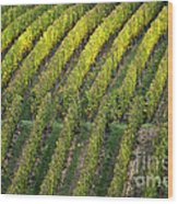 Wine Acreage In Germany Wood Print by Heiko Koehrer-Wagner