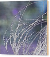 Winter Grass Wood Print by Artist and Photographer Laura Wrede