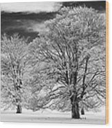 Winter Horse Chestnut Trees Monochrome Wood Print by Tim Gainey