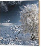 Winter Landscape Wood Print by Grant Glendinning