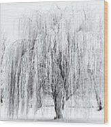 Winter Willow Wood Print by Mike  Dawson