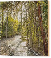 Wolf Creek Afternoon Light Wood Print by Omaste Witkowski