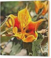 Yellow Flower Wood Print by Gregory Dyer