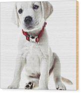 Yellow Lab Puppy Wood Print by Diane Diederich