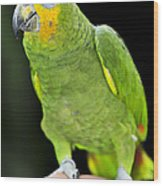 Yellow-shouldered Amazon Parrot Wood Print by Elena Elisseeva