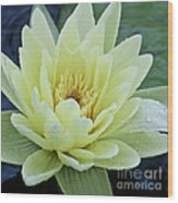Yellow Water Lily Nymphaea Wood Print by Heiko Koehrer-Wagner