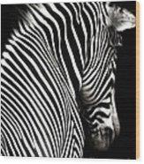 Zebra On Black Wood Print by Elle Arden Walby