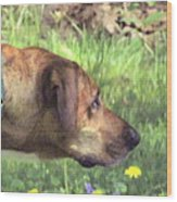 Sighthound At Work Wood Print by Patty Gross