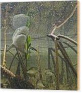 A Lemon Shark Pup Swims Among Mangrove Wood Print by Brian J. Skerry