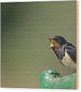 Barn Swallow Hirundo Rustica Fledgling Wood Print by Cyril Ruoso