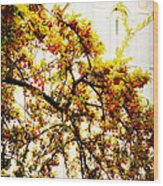 Branch Of Heaven Wood Print by La Rae  Roberts