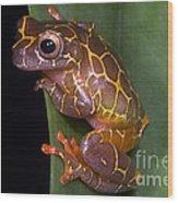 Clown Tree Frog Wood Print by Dante Fenolio