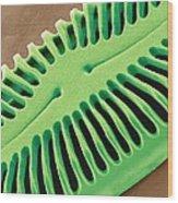 Diatom Frustule, Sem Wood Print by Steve Gschmeissner