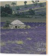 Field Of Lavender. Sault Wood Print by Bernard Jaubert