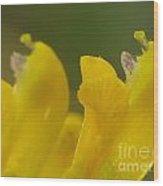 Flower Wood Print by Odon Czintos