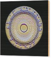 Fossil Diatom, Light Micrograph Wood Print by Frank Fox