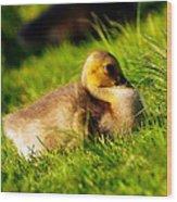 Gosling In Spring Wood Print by Paul Ge