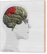 Human Brain, Parietal Lobe Wood Print by Christian Darkin