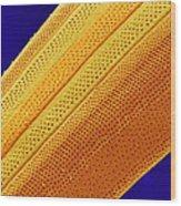 Marine Diatom Alga, Sem Wood Print by Susumu Nishinaga