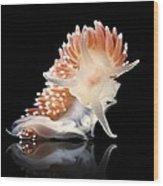 Nudibranch Wood Print by Alexander Semenov