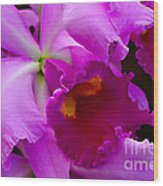 Orchid 5 Wood Print by Julie Palencia