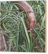 Organic Serpent Garlic Wood Print by Maxine Adcock