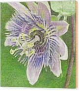 Passiflora Alatocaerulea Wood Print by Steve Asbell