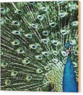 Peacock Wood Print by Ivan Vukelic