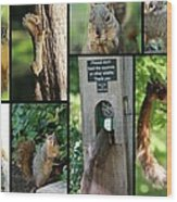 Please Don't Feed The Squirrels Wood Print by Elizabeth Hart