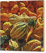 Pumpkins And Gourds Wood Print by Elena Elisseeva