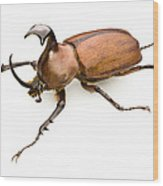 Rhinoceros Beetle Wood Print by Lawrence Lawry